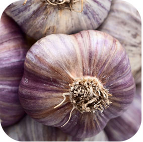Garlic - Coronary and Immune Support