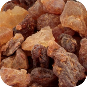 Guggul - Cholesterol, Cardiovascular, Joint and Thyroid Support